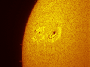 Solar active region in h-alpha