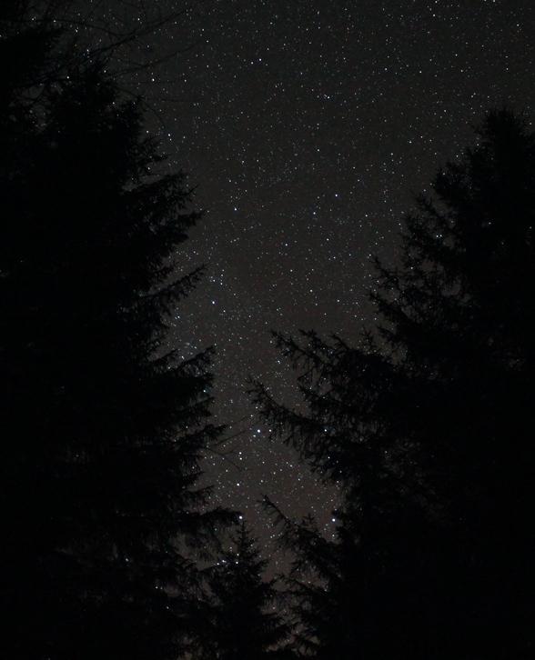 MilkyWay_Trees_GallowayForest